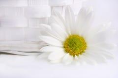 Blanc sur le blanc Photographie stock libre de droits