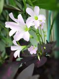 blanc violet Photos libres de droits