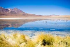 blanca Bolivia Laguna Fotografia Stock