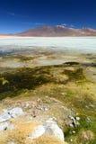 Blanca de Laguna Réservation d'Eduardo Avaroa Andean Fauna National bolivia Photographie stock libre de droits