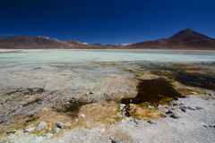 Blanca de Laguna Reserva de Eduardo Avaroa Andean Fauna National bolivia Imágenes de archivo libres de regalías