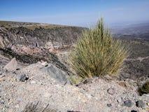 Blanca nacional de las salinas y Aguada de Reserva, Perú Imagen de archivo