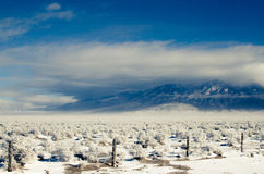 Blanca Peak in a Blizzard Stock Photos