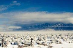 Blanca Peak in una bufera di neve Fotografie Stock