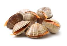 Blanch clams. On a white background stock photo