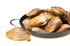 Blanch clams. Isolated on wood background stock photography