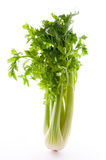 Blanched celery Royalty Free Stock Images