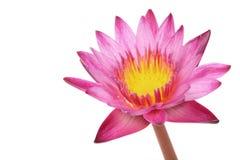 Blanco aislado loto rosado Fotografía de archivo