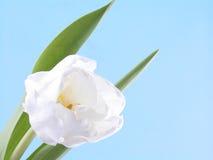 Blanco, belleza de resorte Imagen de archivo libre de regalías