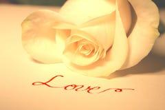 Blanco color de rosa y amor Foto de archivo libre de regalías