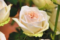 Blanco con las rosas anaranjadas Imagenes de archivo
