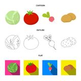Blanco de col, rojo del tomate, arroz, patatas Las verduras fijaron iconos de la colección en la historieta, esquema, símbolo pla ilustración del vector
