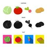 Blanco de col, rojo del tomate, arroz, patatas Las verduras fijaron iconos de la colección en la historieta, negro, símbolo plano libre illustration
