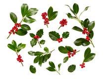 Blanco de Holly With Red Berries On de la Navidad Imagen de archivo
