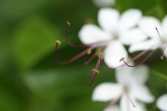 Blanco de la flor imagenes de archivo