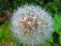 Blanco de la flor Fotografía de archivo