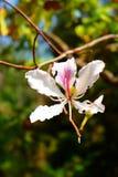 Blanco de la flor el hermoso Fotografía de archivo libre de regalías