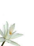 Blanco de la rama de la flor de la orquídea abajo Fotografía de archivo libre de regalías