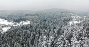 Blanco del bosque de la nieve Visión desde la tapa de la montaña metrajes