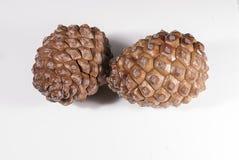 Blanco del cono del pino marrón dos aislado Imagenes de archivo