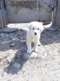 Blanco del perro foto de archivo