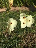Blanco en Sun fotos de archivo libres de regalías