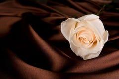 Blanco hermoso color de rosa y mano Imagen de archivo libre de regalías