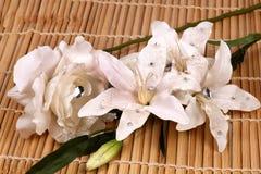 Blanco lilly y flores color de rosa Fotografía de archivo