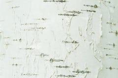 Blanco natural de la corteza de abedul y primer del fondo de las rayas negras Fotografía de archivo libre de regalías