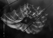 Blanco negro de Spiderweb Fotografía de archivo libre de regalías