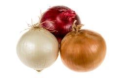 Blanco, oro y cebolla roja Foto de archivo libre de regalías