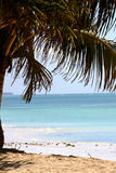 Blanco Sandy Beach And Palm Tree de Zanzíbar Imagen de archivo libre de regalías