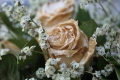 Blanco seque color de rosa después de día de San Valentín Imagenes de archivo