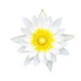 Blanco waterlily o flor de loto foto de archivo
