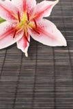Blanco y color de rosa Imagenes de archivo