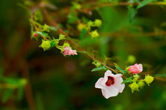Blanco y flor de Crimsom Fotos de archivo libres de regalías