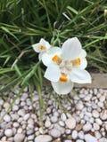 Blanco y naranja Imagenes de archivo
