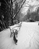 Blanco y negro de banco en un parque Foto de archivo