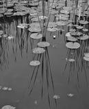 Blanco y negro de una charca Imagen de archivo libre de regalías