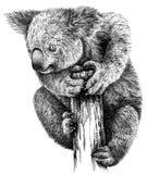 Blanco y negro grabe el ejemplo aislado de la koala Fotografía de archivo