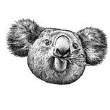 Blanco y negro grabe el ejemplo aislado de la koala Imagen de archivo libre de regalías