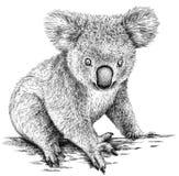 Blanco y negro grabe el ejemplo aislado de la koala Foto de archivo libre de regalías