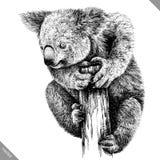 Blanco y negro grabe el ejemplo aislado del vector de la koala Fotos de archivo libres de regalías