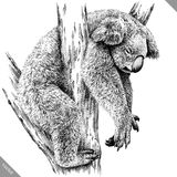 Blanco y negro grabe el ejemplo aislado del vector de la koala Foto de archivo libre de regalías
