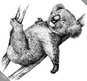 Blanco y negro grabe el ejemplo aislado del vector de la koala Foto de archivo