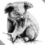Blanco y negro grabe el ejemplo aislado del vector de la koala Imagen de archivo libre de regalías