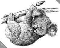 Blanco y negro grabe el ejemplo aislado del vector de la koala Imágenes de archivo libres de regalías