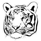 Blanco y negro principal del tigre, vector stock de ilustración