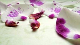 Blanco y púrpura Fotos de archivo libres de regalías