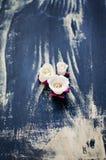 Blanco y rosas de la pasta de azúcar de Borgoña Imagenes de archivo